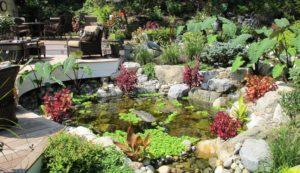 estanque con muchas plantas