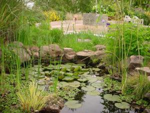 estanque vegetal