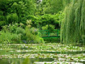 el estanque de ninfeas el jardin