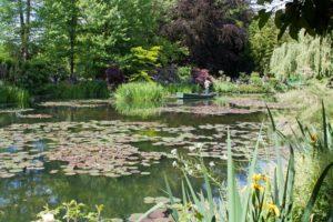 estanque de plantas