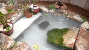 estanque de tortuga