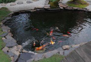 Como hacer un estanque todo lo que necesitas saber aqui for Como hacer un estanque para peces koi