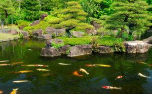 estanque con peces para tu jardin