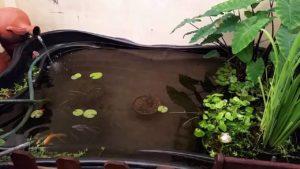 limpieza de estanque