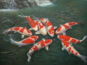 peces koi en estanque