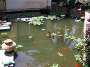 sacar hojas y peces del estanque