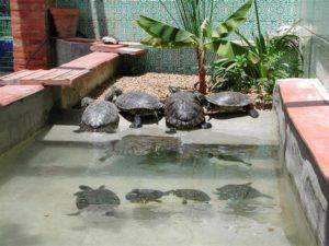 Estanque para tortugas todo lo que necesitas saber aqui - Estanques para tortugas de agua ...